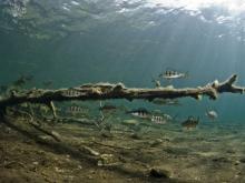 Järven tarina