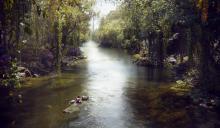 Viidakkokirja